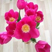 Тюльпаны оптом от 26 р с доставкой в Хабаровск!