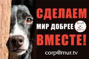 Помощь животным. Сделаем мир лучше!
